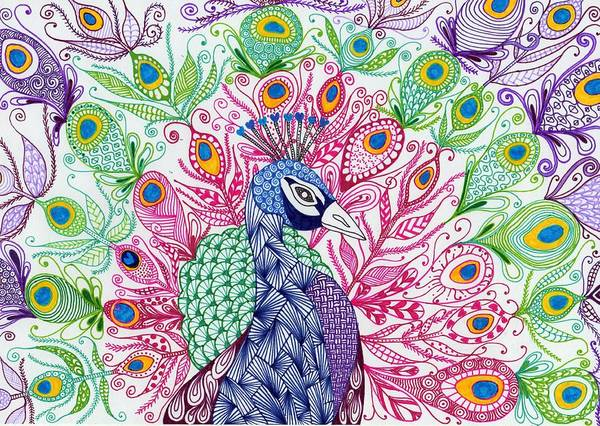 Peacock Drawing - Peacock by Sharon White