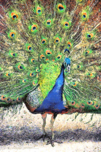 Photograph - Peacock by Stacey Sather