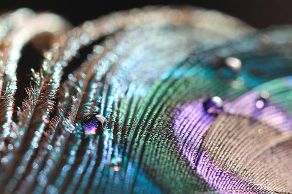 Peacock Swirls Art Print