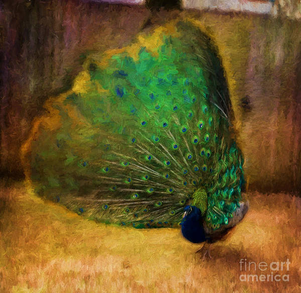 Pheasant Digital Art - Peacock by Terry Weaver