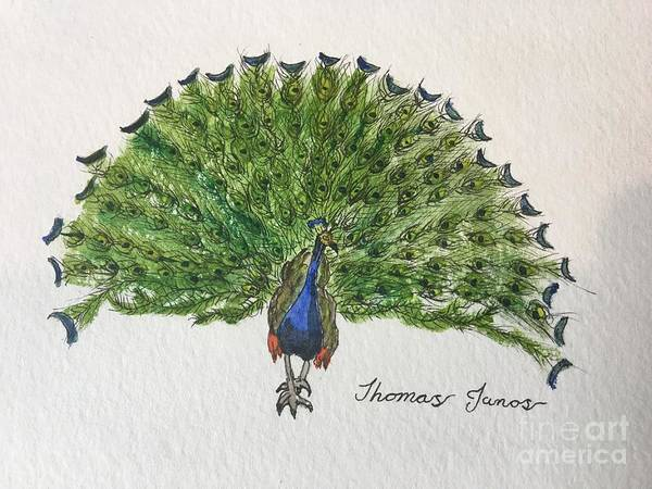Painting - Peacock by Thomas Janos