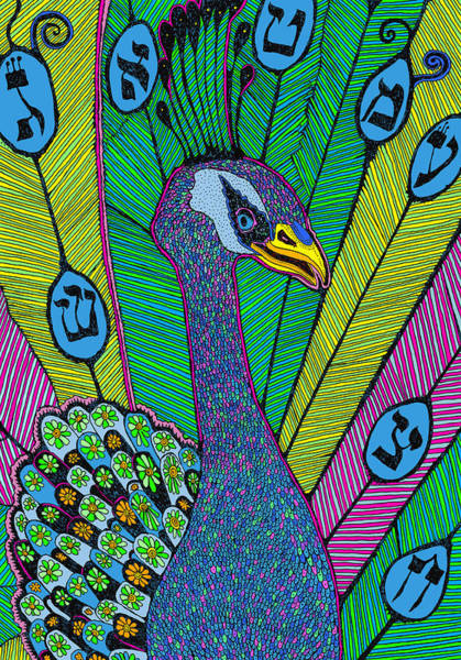 Drawing - Peacock by Yom Tov Blumenthal
