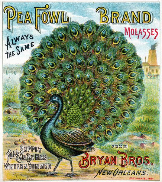 Drawing - Peafowl Brand Molasses.  by Granger