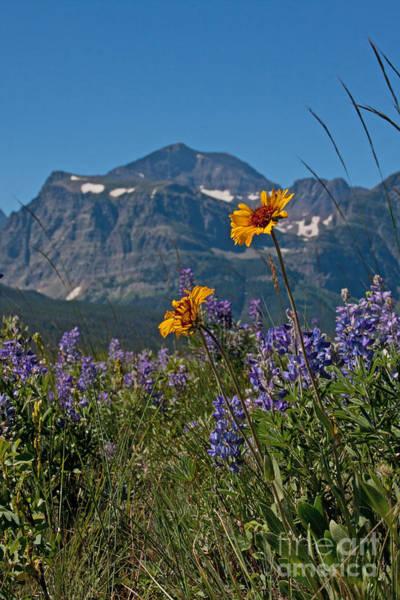 Photograph - Peak Of Summer by Katie LaSalle-Lowery