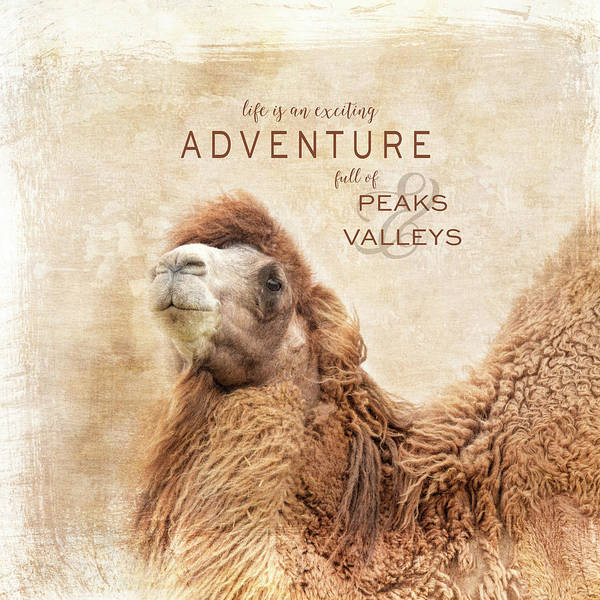 Photograph - Peaks And Valleys Camel Art With Words by Jai Johnson