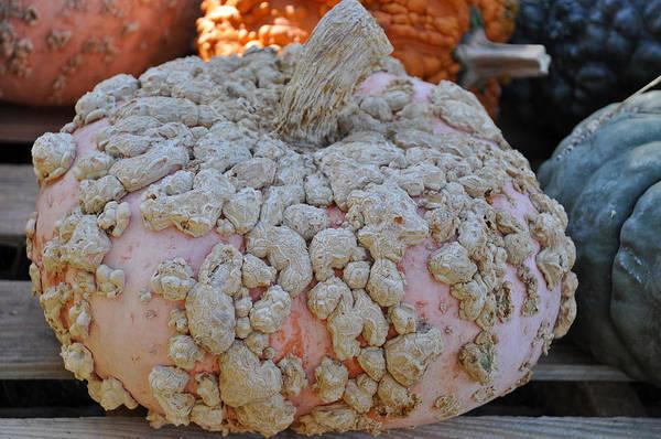 Photograph - Peanut Pumpkin by Teresa Blanton