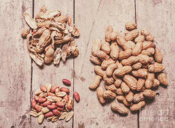Peeling Photograph - Peanut Shelling by Jorgo Photography - Wall Art Gallery