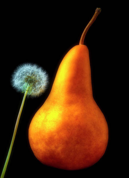 Dandelion Puff Photograph - Pear And Dandelion by Garry Gay