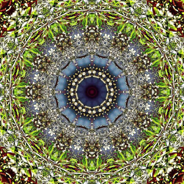 Digital Art - Pear Blossom by Frans Blok