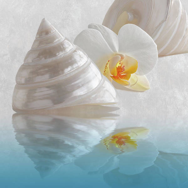 Photograph - Pearl Troca Shells With White Orchid Reflections by Gill Billington