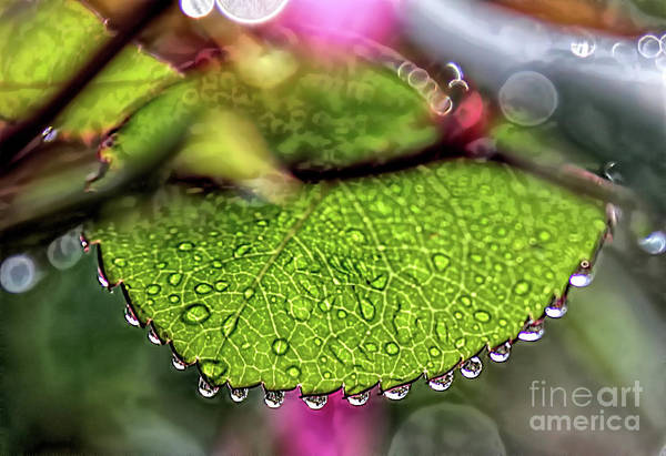 Photograph - Pearls by Mark Jackson