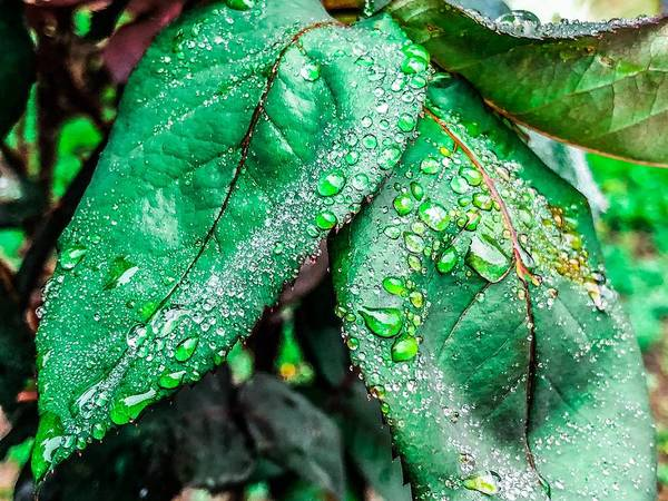 Photograph - Pearls Of Nature by Cate Franklyn