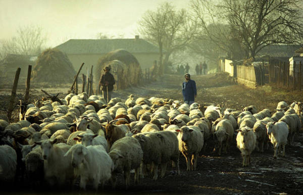 Photograph - Peasants And Herd On The Village Path by Emanuel Tanjala