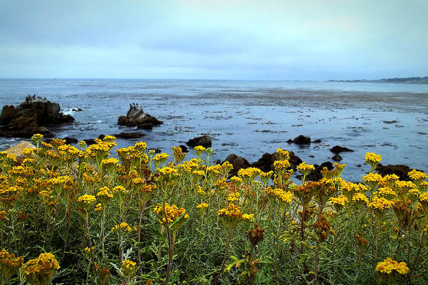 Photograph - Flowers Of Pebble Beach Shoreline  by Glenn McCarthy Art and Photography