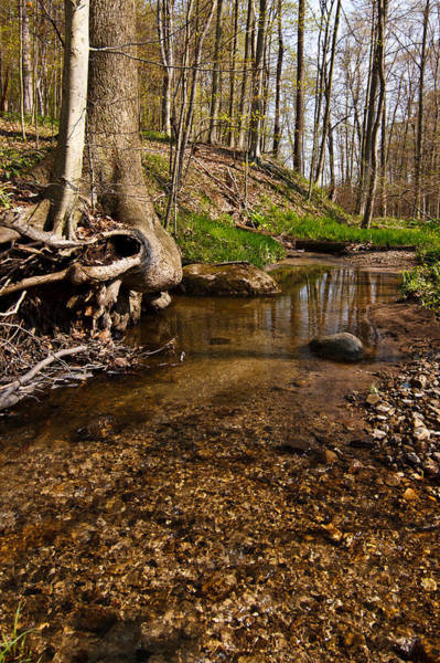 Photograph - Pebble Stream by James Reed