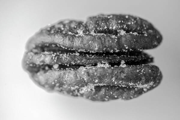 Photograph - Pecan Nut Macro Black White 2967 by David Haskett II