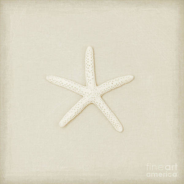 Wall Art - Photograph - Pecil Starfish by Lucid Mood
