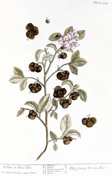 Photograph - Peco Tea, 1735 by Granger