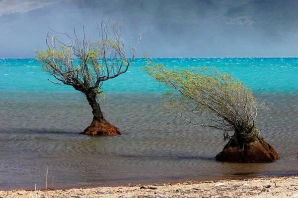 Peculiar Trees Art Print