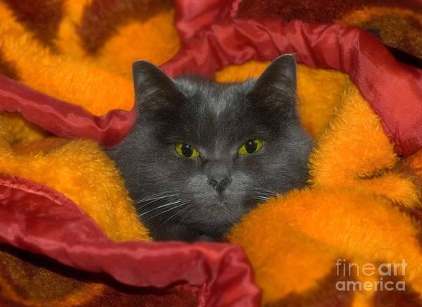 Photograph - Peek A Boo by Joann Vitali