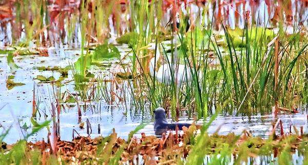 Photograph - Peek A Boo Otter by Alice Gipson
