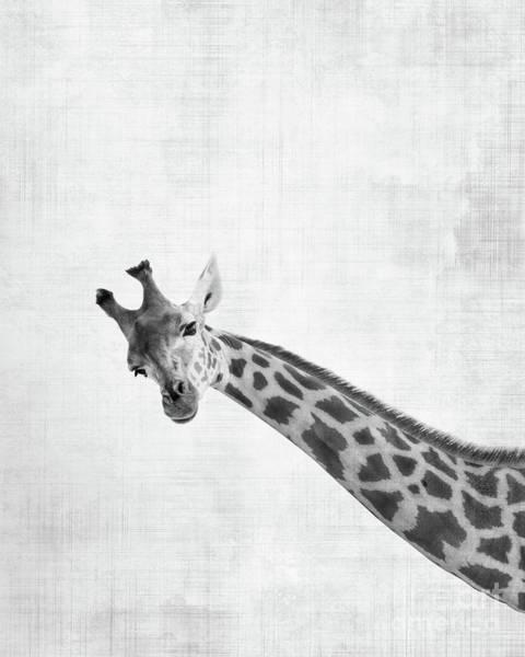Long Neck Photograph - Peekaboo Giraffe by Delphimages Photo Creations