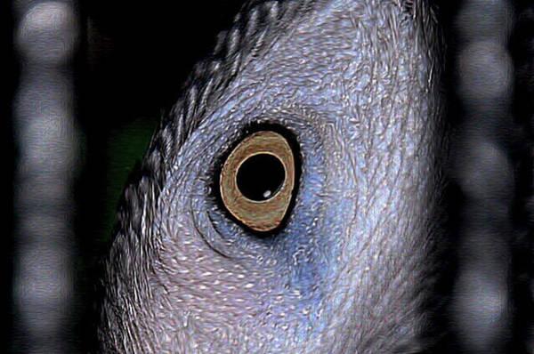 Photograph - Peekaboo by Phyllis Meinke