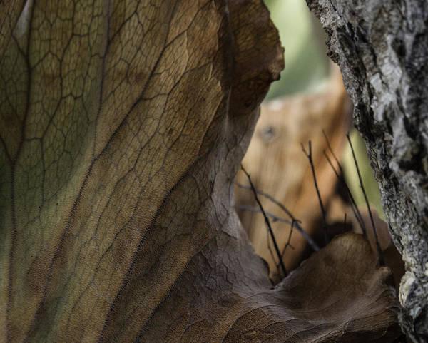 Staghorn Fern Photograph - Peeking In by Christine G Stuart