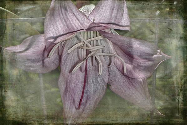 Photograph - Peeking Through by Judy Hall-Folde