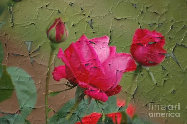 Digital Art - Peeling Rose by Donna Bentley