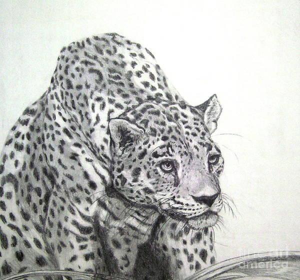 Carnivorous Drawing - Peering Leopard  II by Nancy Rucker