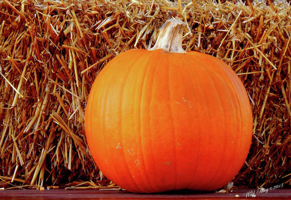 Photograph - Perfect Pumpkin by Wild Thing