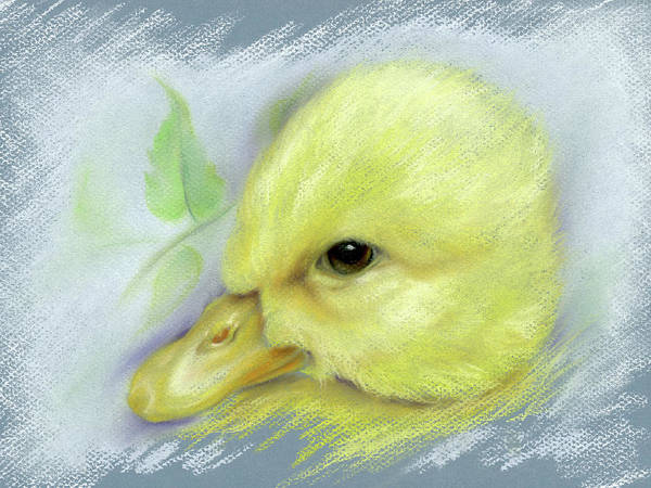 Pastel - Pekin Duckling Portrait by MM Anderson