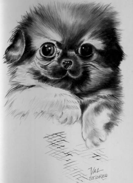 Painting - Pekinese Puppy by Val Stokes