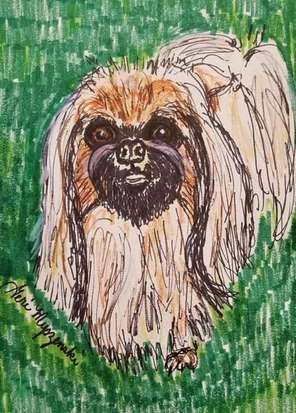 Beach Grass Drawing - Pekingese Dog by Geraldine Myszenski