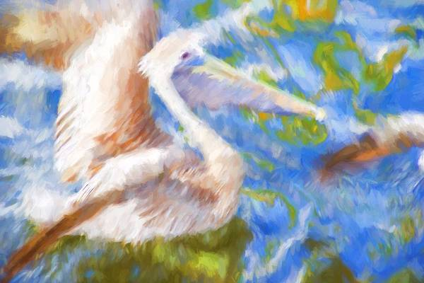 Photograph - Pelican Abstracts by Alice Gipson