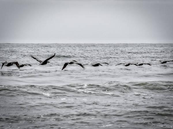 Pelican Black And White Art Print
