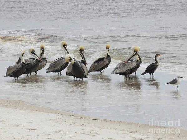 Wall Art - Photograph - Pelican Briefing by Lucyna A M Green