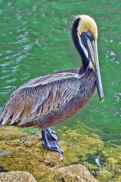 Photograph - Pelican By The Pier by Deborah Benoit