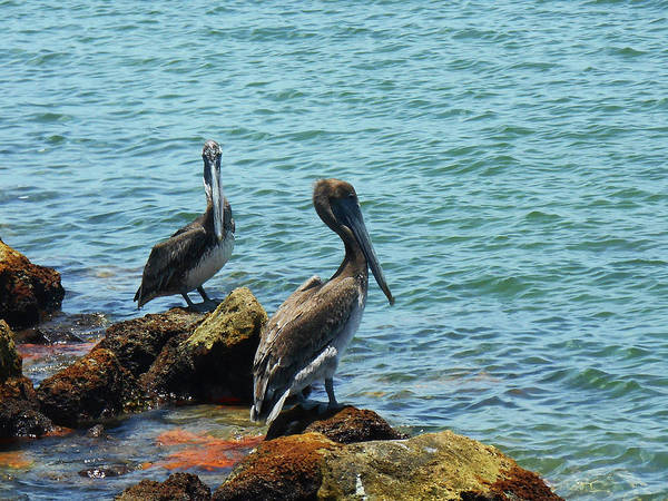 Wall Art - Photograph - Pelican Coast Guard  by Irina Sztukowski