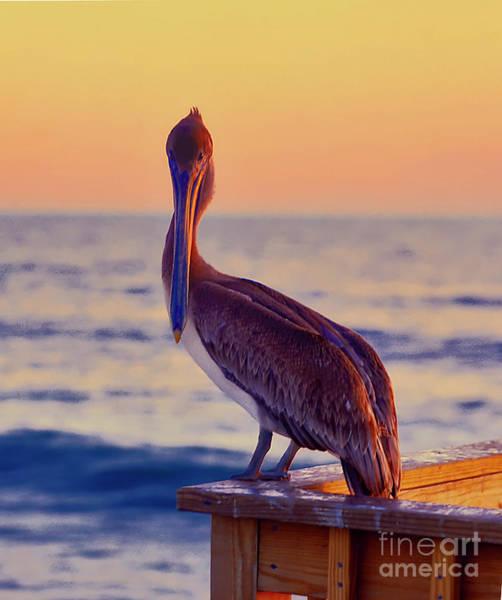 Photograph - pelican, Florida, pier, ocean by Tom Jelen