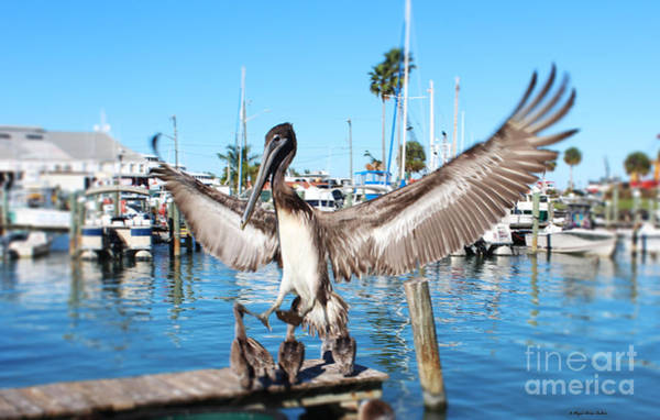 Pelican Flying In Art Print