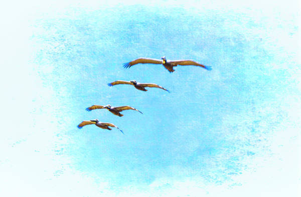 Pelican Mixed Media - Pelican Formation by Joseph Hollingsworth