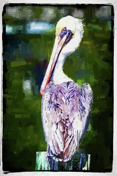 Photograph - Pelican Greens by Alice Gipson