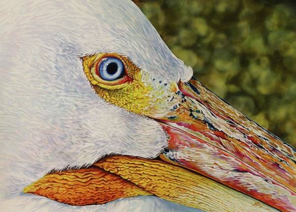 Painting - Pelican by Greg and Linda Halom