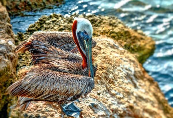Photograph - Pelican II by Carol Montoya
