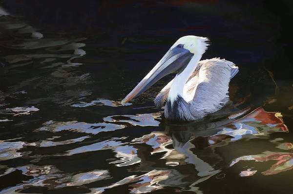 Photograph - Pelican II Oil Painting by Jody Lovejoy