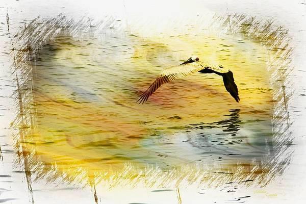 Pelican Mixed Media - Pelican In Flight by Athala Carole Bruckner