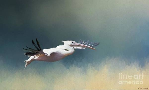 Pelican Mixed Media - Pelican In Flight by Eva Lechner