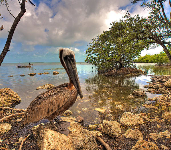 Wall Art - Photograph - Pelican In The Florida Keys by William Wetmore